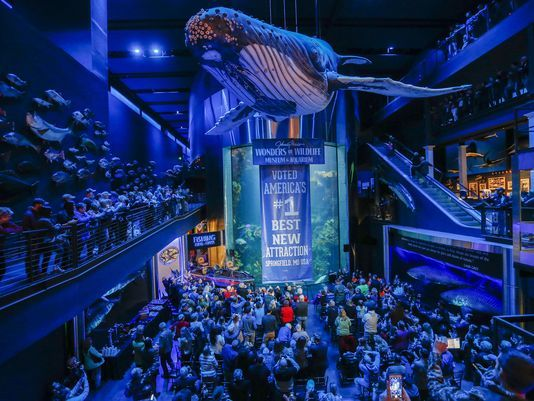 "Wonders of Wildlife voted ""America's Number One Best New Attraction"""